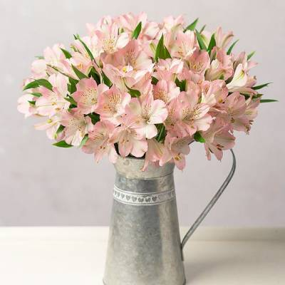 Simply Alstroemeria - Flowers Gifts