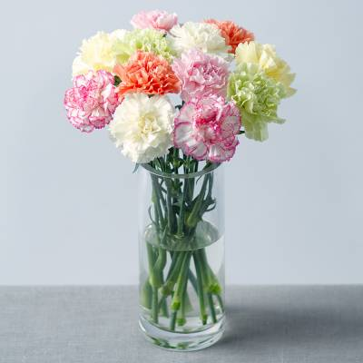 12 Carnations with Gypsophila