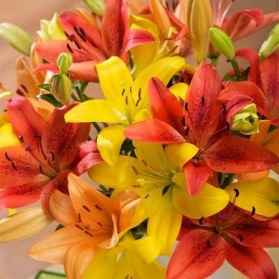 Autumn Luxury Lilies