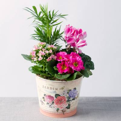 Spring Pink Planter