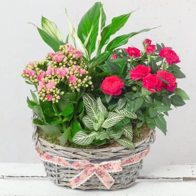 Pink Flower Planter