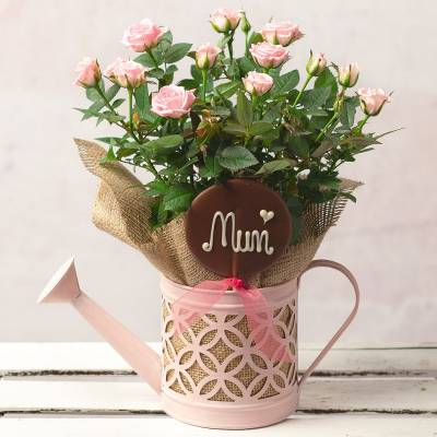 Mother's Day Rose Gift