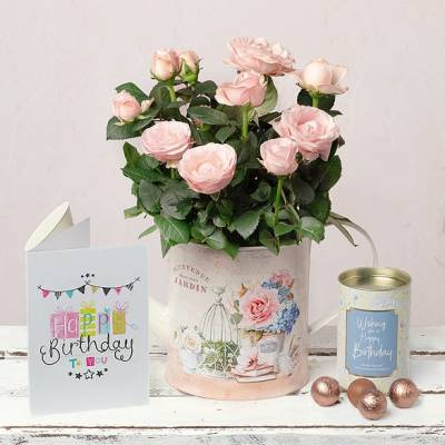 Birthday Rose and Chocolates