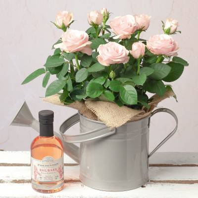 Rose and Gin Gift Set