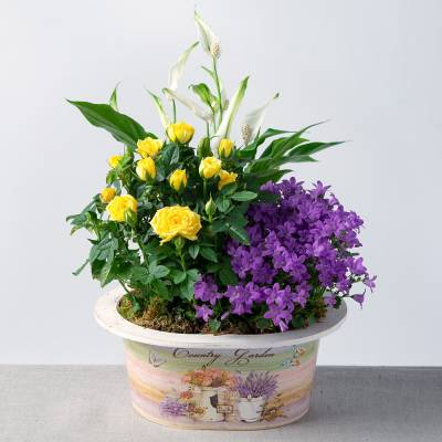 Vibrant Summer Planter - Flowers Gifts
