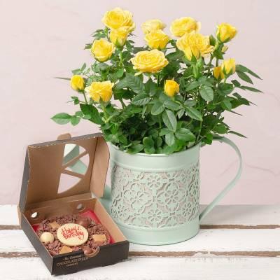 Birthday Rose Gift