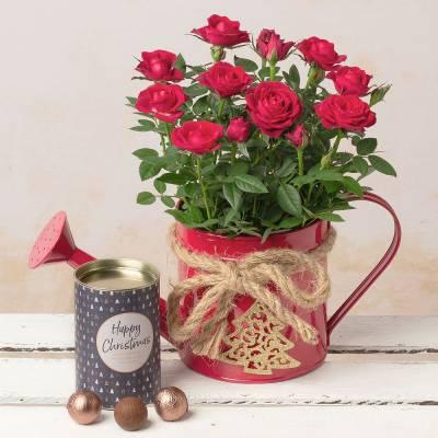 Rose Gin Gift Set