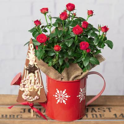 Christmas Rose and Chocolate Gift