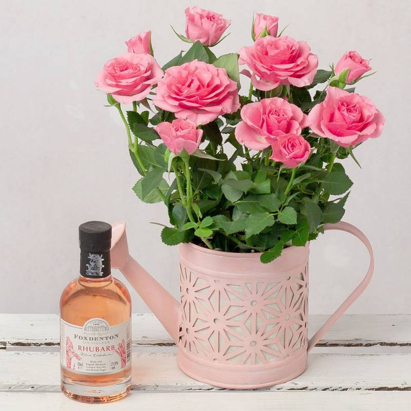 Gin and Rose Gift
